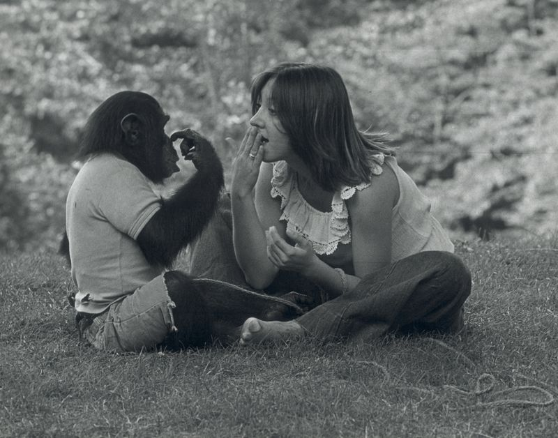 Project-nim-chimpsky-chimpanzee-laura-ann-petitto
